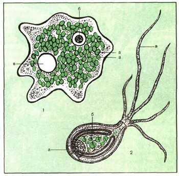 Микориза - симбиоз гриба и растения корня купить нужна примеры