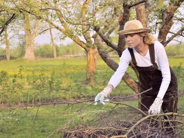 Уход за яблонями круглый год: как ухаживать за саженцами и взрослыми деревьями