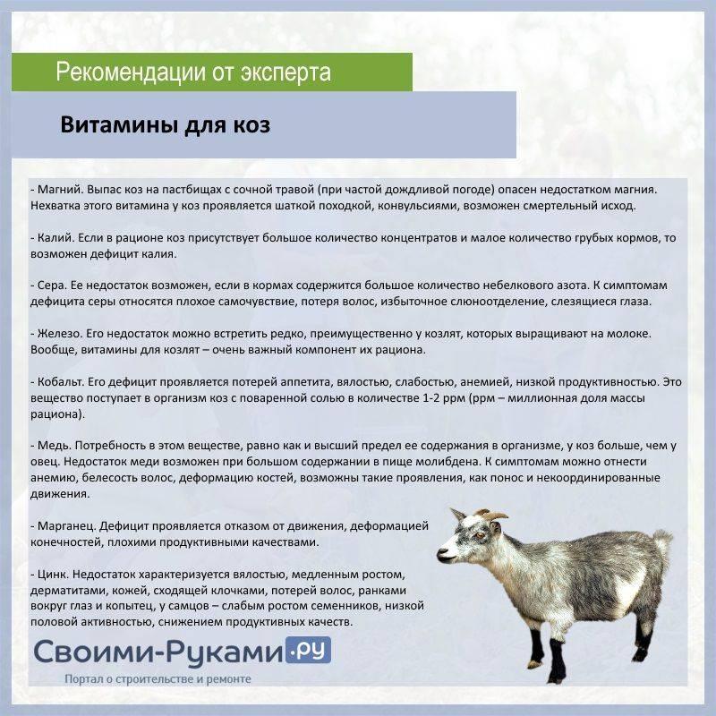 Коза не отдает полностью молоко: что делать, причины и решение проблемы