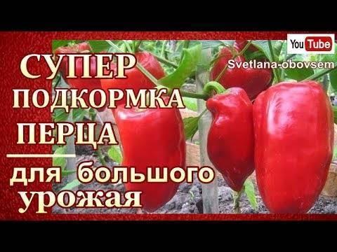 Чем подкормить перец в период плодоношения, чтобы он был крупным и сладким