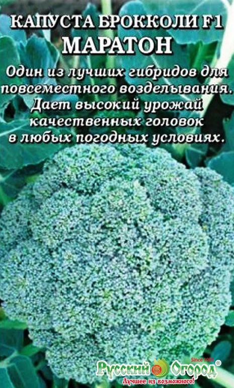 Деликатес для настоящих гурманов — капуста брокколи маратон f1: полное описание
