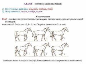 Максимальная скорость лошади. виды бега лошади. скаковые лошади