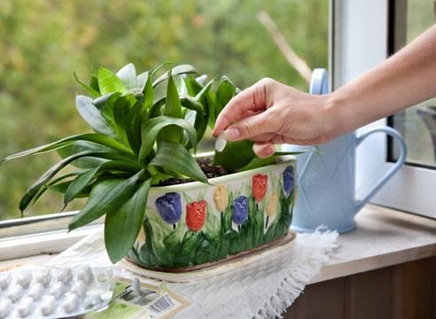 Подкормка орхидей во время цветения: чем подкормить цветущую орхидею в домашних условиях? и когда ее нужно подкармливать?