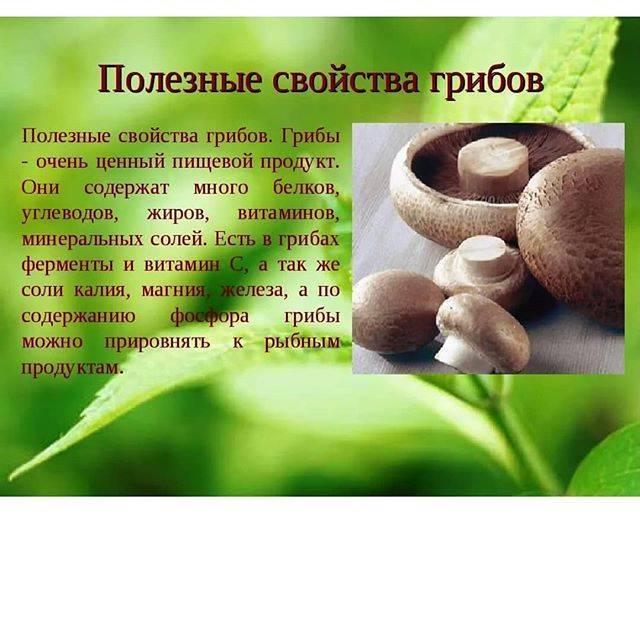 Спорные продукты: чем полезны и чем вредны грибы