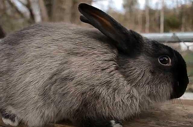 Сколько раз в день кормить кроликов