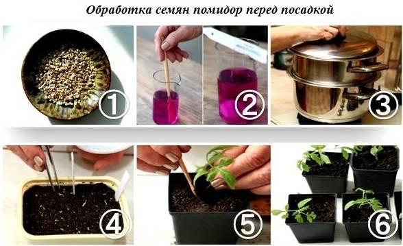 Подготовка семян томатов к посеву на рассаду в домашних условиях – способы предпосевной обработки