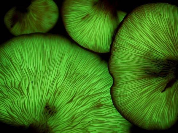 Список лесных съедобных грибов с фото, названиями и описанием