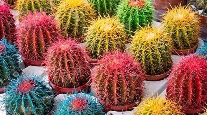 Лучшие виды цветущих домашних кактусов с фото и названиями