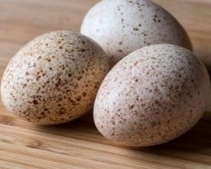 Правила и рекомендации по овоскопированию утиных яиц по дням