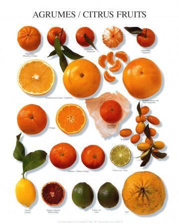 Сорта мандаринов и их виды: домашние, дикие и декоративные