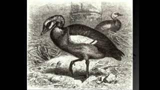 Перосъемная машина для ощипа гусей: описание