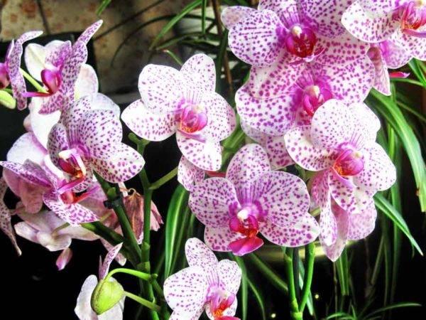 Разновидности орхидей – названия сортов с описанием и фото, уход за цветами в домашних условиях