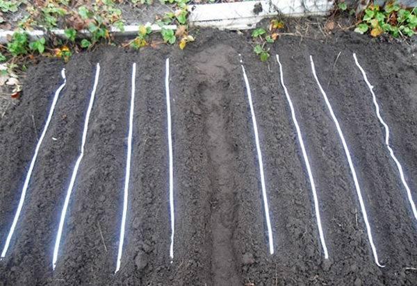 Как посадить морковь с помощью ячейки для яиц - agroflora.ru