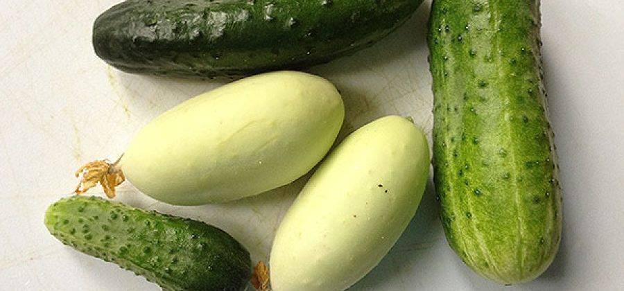 Белые огурцы: сорта и гибриды для выращивания в теплице (описание с фото)
