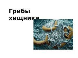 Хищные грибы