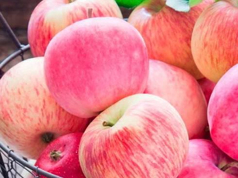 Яблоня малиновка — описание описание сорта суйслепское декоративное