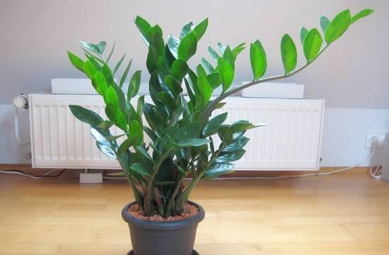 Правила выбора комнатных растений для офиса