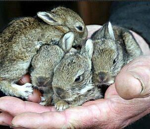Лечение кроликов от ринита