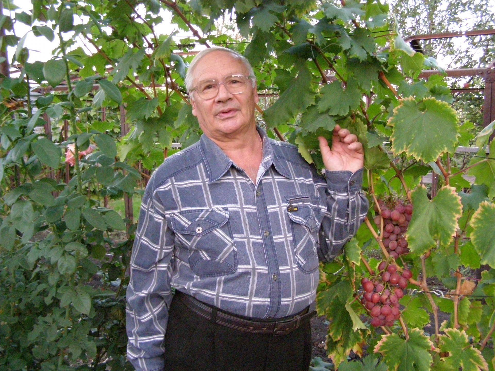 Свет в руках людей: о сорте винограда зарница