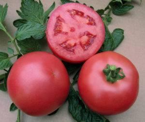 Среднеспелый универсальный томат «розовый царь» — описание сорта и характеристики