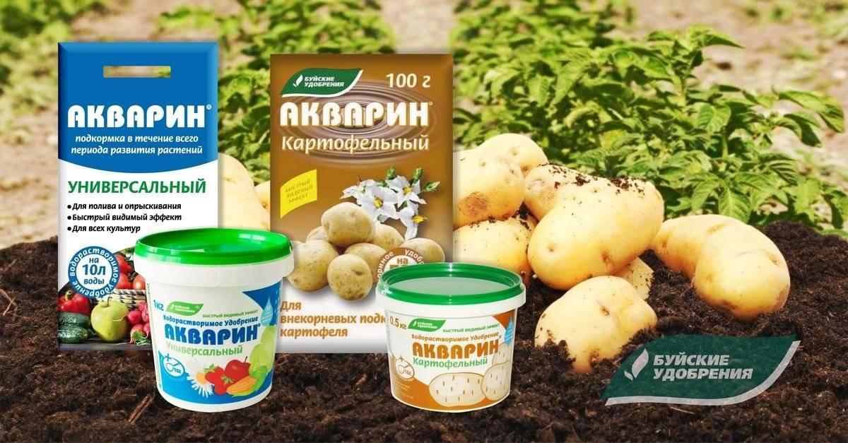 Чем подкормить картофель в период цветения