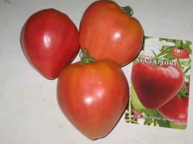 Томат «мазарини»: характеристика и описание сорта, урожайность, отзывы, фото