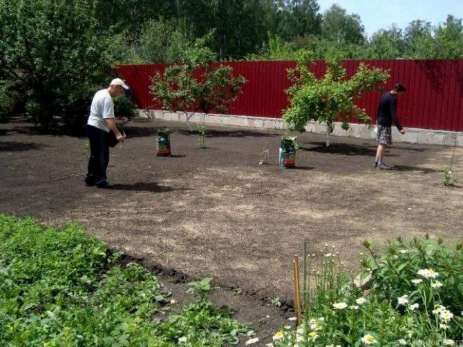 Как и когда сеять газонную траву: пошаговая инструкция для новичков