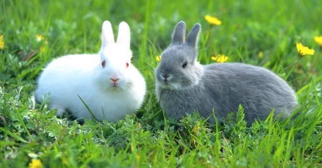 Можно ли кроликам давать лопухи?
