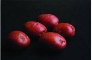 Сорт картофеля «романо» – описание и фото