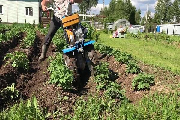 Прополка картошки мотоблоком - fermnamilion