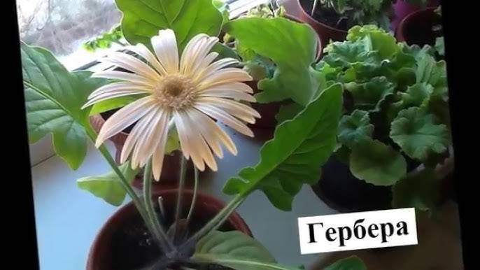 Неземная красота: 16  необычных комнатных растений, о которых вы не знали