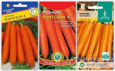 Морковь витаминная 6: полная характеристика и описание сорта, история селекционирования и выращивание, а также достоинства и недостатки, сбор и хранение урожая русский фермер