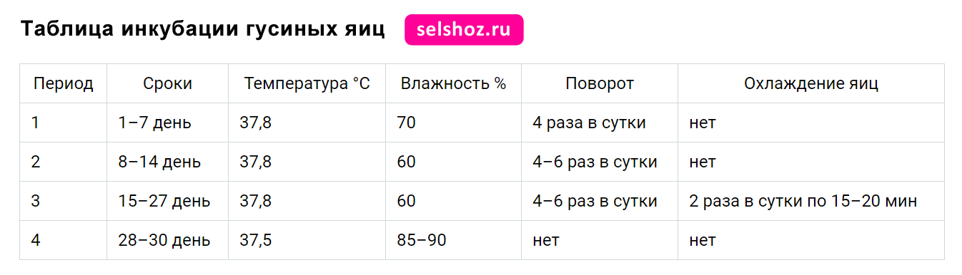 Инкубация куриных яиц в домашних условиях: температура и влажность, режим, таблица