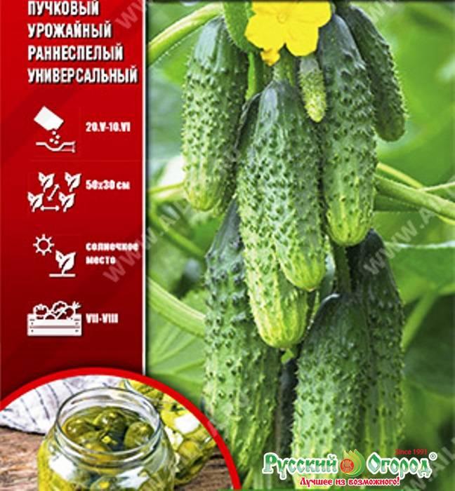 Огурец конек горбунок f1: отзывы, фото семян агро аэлита, описание сорта, посадка и уход