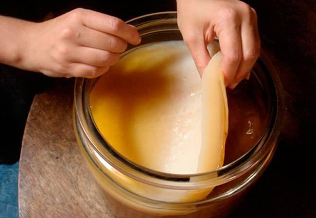 Чайный гриб: как вырастить с нуля самому в домашних условиях
