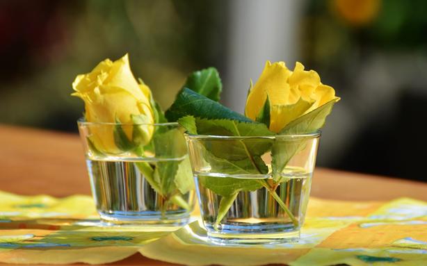Предзимняя подкормка роз — тонкости проведения мероприятий
