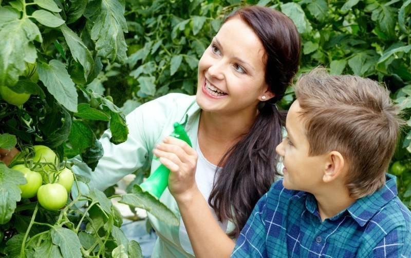 Лучшие способы внекорневой подкормки томатов. советы по выбору удобрения и проведению процедуры