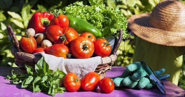 Смешанные посадки: что посадить на одной грядке с помидорами в теплице