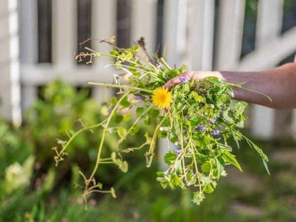 Лазурит — надежный помощник от сорняков