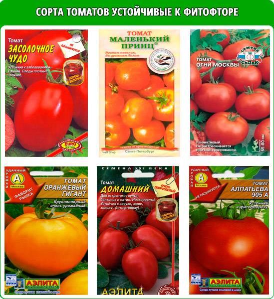 Помидоры которые не болеют фитофторой : 7 проверенных сортов томатов устойчивые к фитофторе. | красивый дом и сад