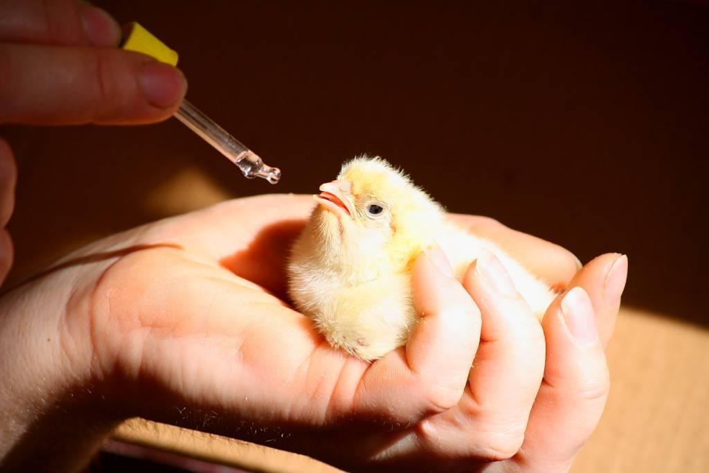 Мясокостная мука - инструкция по применению для животных и птиц