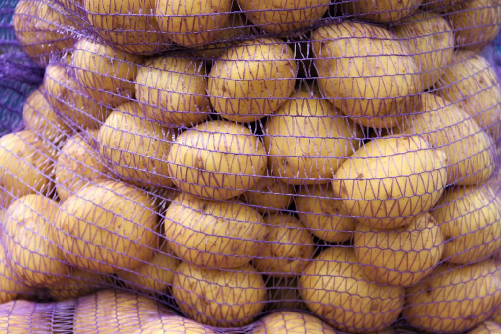 Строение плода картофеля - сад и огород