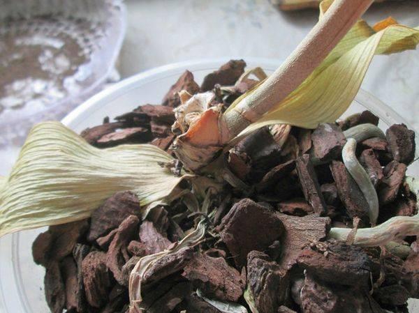 Как реанимировать орхидею, если её корни сгнили и листья стали вялыми