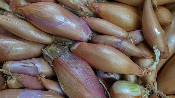 Лук-шалот: выращивание на огороде из семян