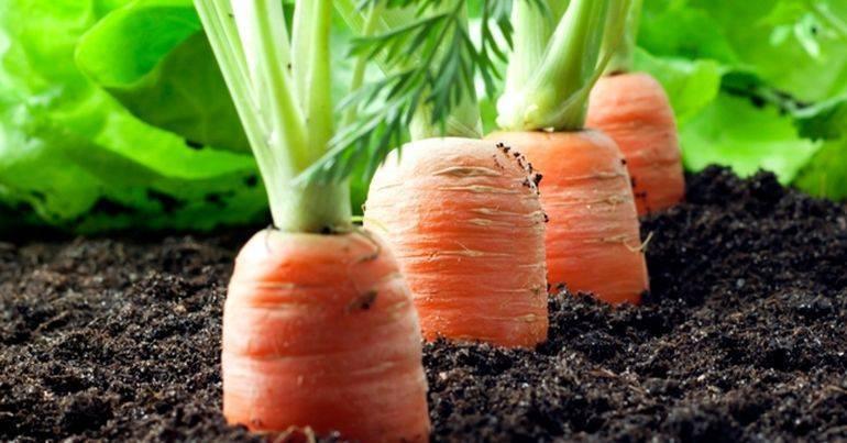 Как и чем приклеить семена моркови на бумагу