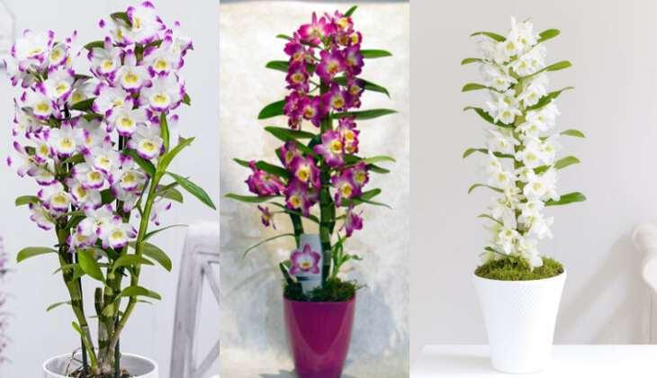 Как расшифровать обозначения на этикетках с орхидеями