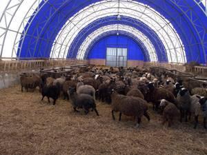 Как правильно самому построить овчарню для овец