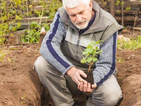 Уход за виноградом весной: советы для садовода