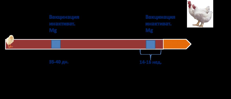 Mycoplasma hominis у женщин и мужчин: что это значит | компетентно о здоровье на ilive