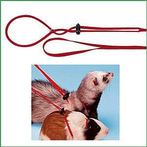 Шлейка для крысы своими руками: как сделать поводок и ошейник, как одеть изделие на питомца